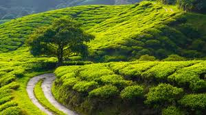 Mettupalayam to Coonoor Tour packages